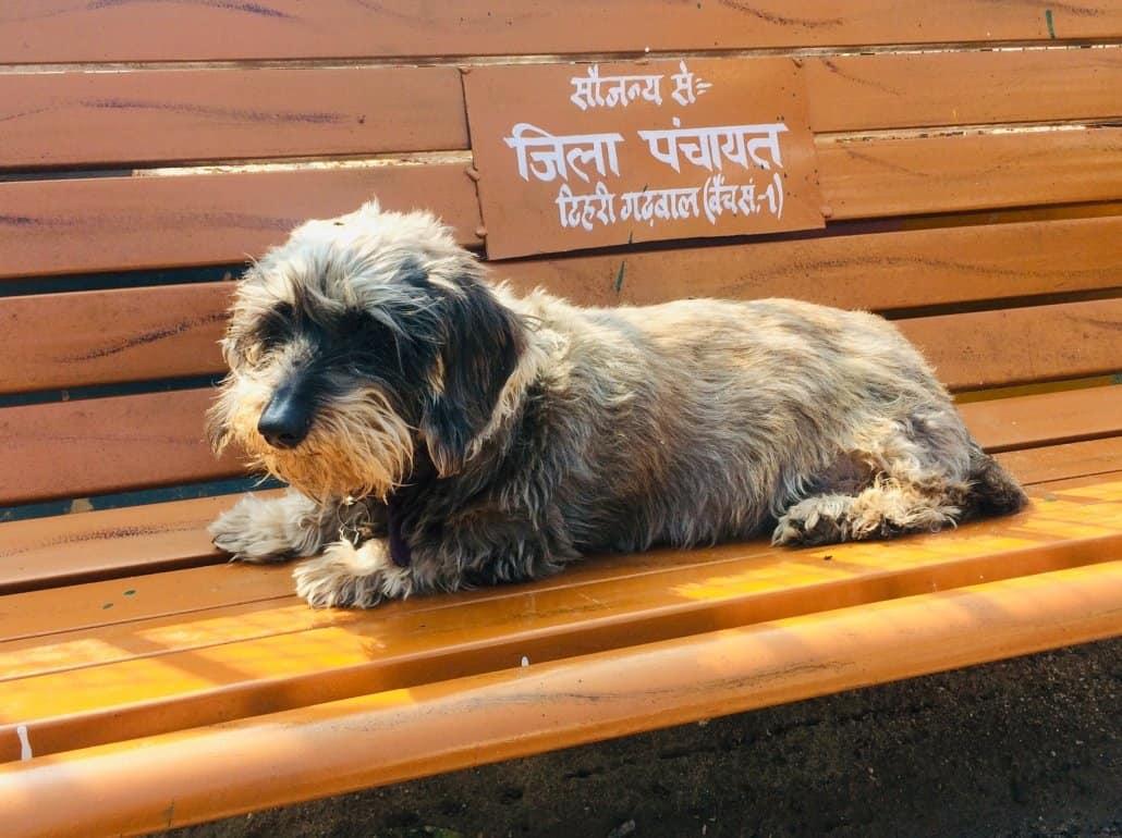 Ema_our gardiant dog